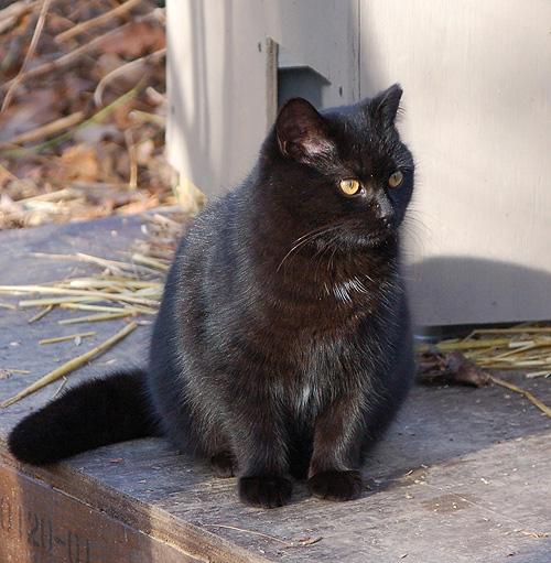 Metro Ferals - adopt rescued kittens washington dc, rescued kittens